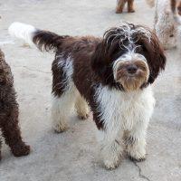 Dogs Paradise Wayomi
